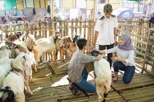 Muzułmańska para na farmie handlu zwierzętami kupuje kozę na ceremonię ofiarowania eid adha