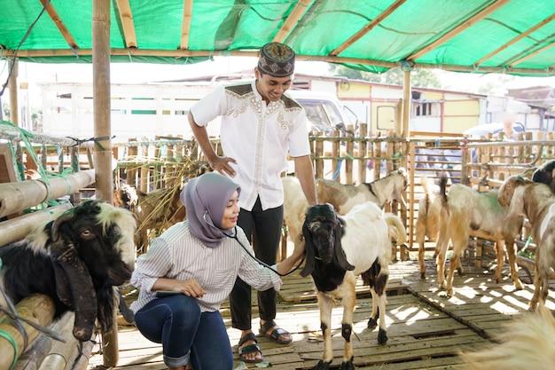 Muzułmański lekarz weterynarii sprawdza kozę na tradycyjnej farmie
