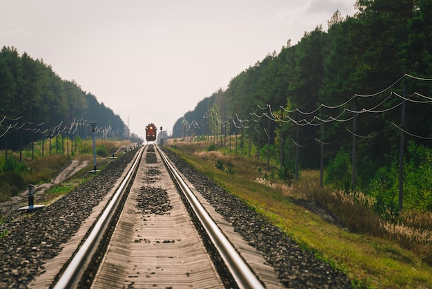 Mystic train jedzie koleją wzdłuż lasu. krajobraz atmosferyczny.