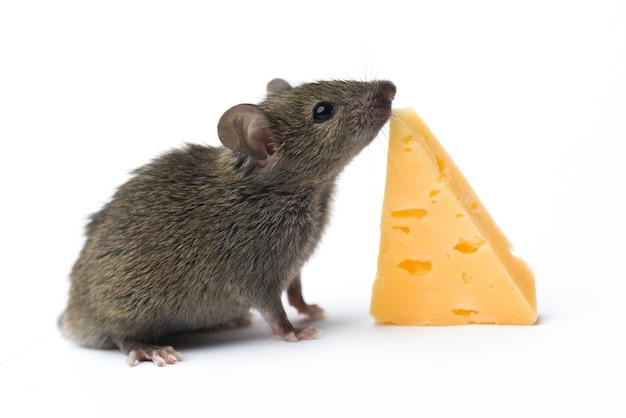 Mysz i ser na białym tle