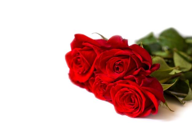 Na białym stole leży pięć czerwonych róż. szkarłatne róże na białym tle. romantyczna pocztówka. walentynki. miejsce na tekst
