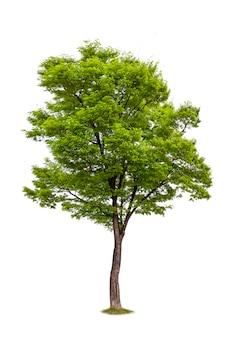 Na białym tle drzewa do dekoracji ekologii