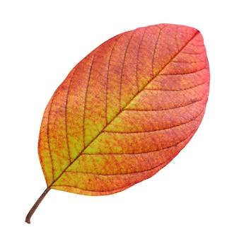 Na białym tle jesienny liść. żółto-pomarańczowy liść na białym tle.