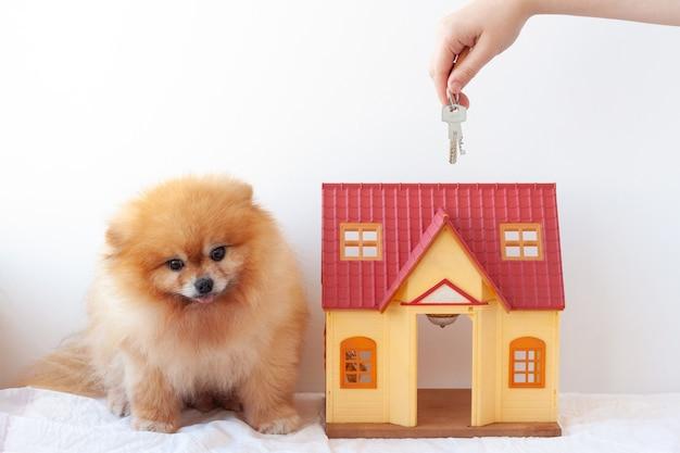 Na białym tle mały domek obok rudowłosego pieska, pomorza pomorskiego, wyciągającego klucze do domu.