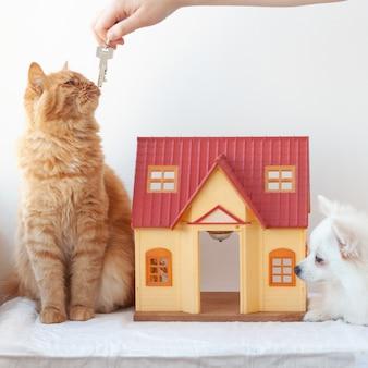 Na białym tle mały domek siedzi obok czerwonego kota, ręka wyciąga klucze do domu.