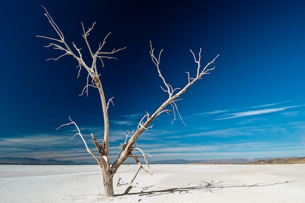 Na białym tle nagie zamarznięte drzewo rosnące w zaśnieżonej ziemi