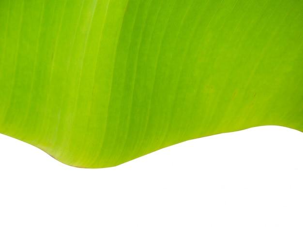 Na białym tle rozmycie zielony liść tekstury na białym tle