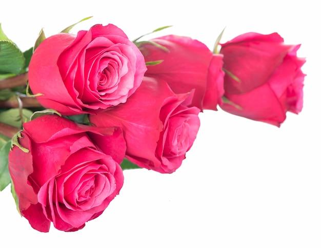 Na białym tle różowy kwiat róż na białym tle