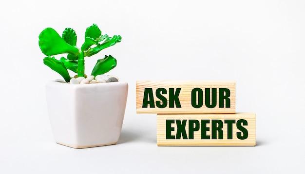 Na jasnym tle roślina w doniczce i dwa drewniane klocki z napisem zapytaj naszego eksperta