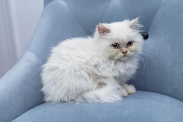 Na kanapie leży biały kot