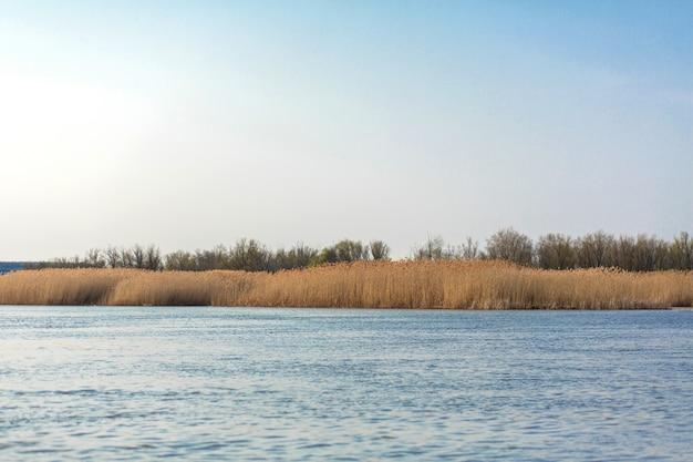 Na niebieskim jeziorze horyzont złotej trzciny