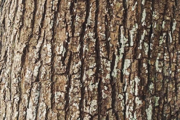 Na nim wytłoczona tekstura brązowej kory porostu drzewnego. kora dębu.
