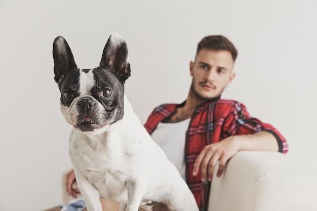 Na pierwszym planie pies buldog francuski siedzący na kanapie ze swoim przyjacielem w tle