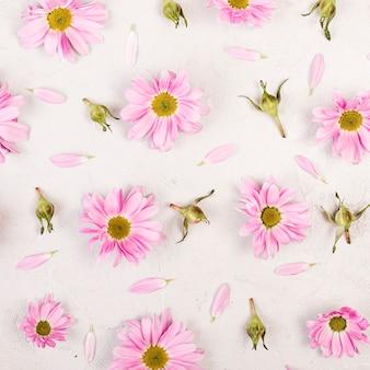 Na płasko leżały różowe kwiaty stokrotki i płatki