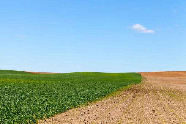 Na polu uprawnym podzielonym na dwie połowy, na jednej rośnie zielona trawa, a na drugiej zaorana ziemia