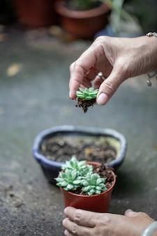 Na roślinie w doniczce w ręku
