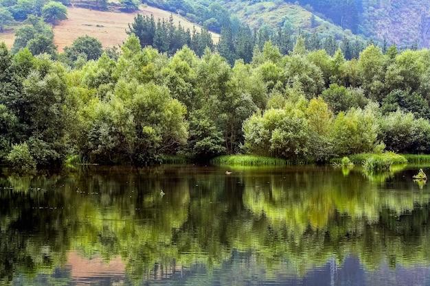 Na skraju zbocza zielona roślinność z odbiciem w wodzie i sielskim krajobrazem. asturias hiszpania. europa.