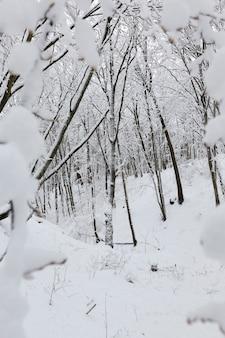 Na śniegu, drzewa liściaste w sezonie zimowym, mroźna zimowa pogoda w przyrodzie po opadach śniegu i mrozach, drzewa liściaste różnych ras po opadach śniegu w parku