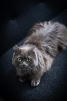 Na sofie siedzi kot, wpatrując się w coś