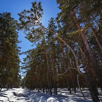 Na tle gwiaździstego nieba zimowa droga z głębokim śniegiem w lesie iglastym