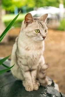 Na trawniku siedzi szary pasiasty kot.