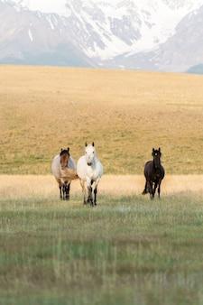 Na trawniku w górach stoją trzy konie. trzy dzikie konie na tle górskiego krajobrazu