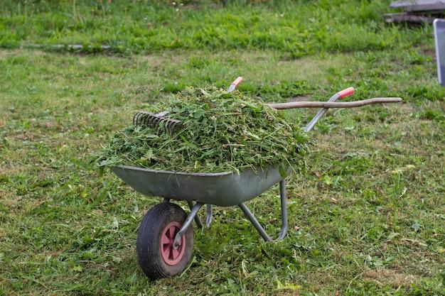 Na trawniku w ogrodzie stoi taczka pełna świeżo skoszonej trawy. na taczce z grabiami do trawy