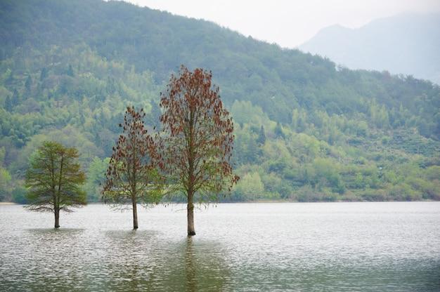 Na wiosnę zalał krajobraz trzech samotnych drzew. gładka woda.