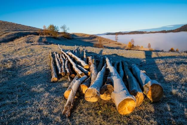 Na zamarzniętej ziemi leżą ścięte drzewa służące do ogrzewania domów