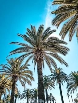 Na zdjęciu palmy na tle pięknego błękitnego nieba
