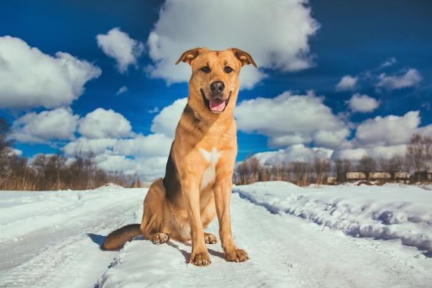 Na zewnątrz ładny pies rasy mieszanej. kundel w śniegu