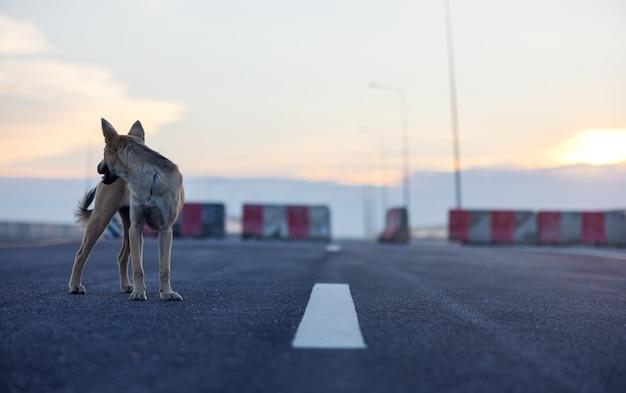 Na zewnątrz na polnej drodze pies stoi na chodniku podczas zachodu słońca.