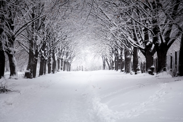 Na zewnątrz pięknej drogi w zimowym parku