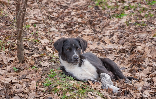 Na ziemi leży piękny kundel. pies odpoczywa pod drzewem.