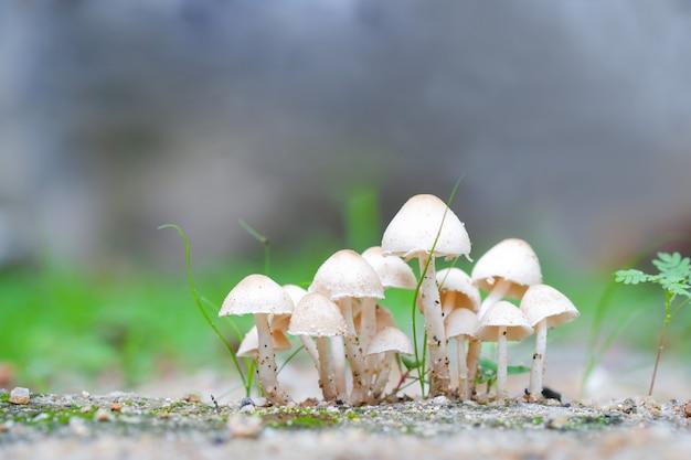 Na ziemi rosną grzyby. nie można jeść, ale było pięknie. idealne na naturalne tła.