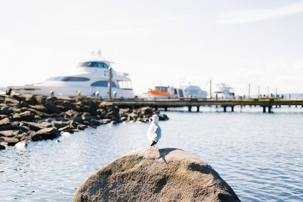Nabrzeże jeziora waszyngton przy dobrej pogodzie. mewa siedzi na skale przy ścianie zacumowanych jachtów
