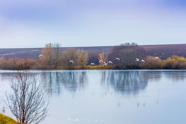 Nad rzeką z czystą wodą latają gęsi, jesienny krajobraz