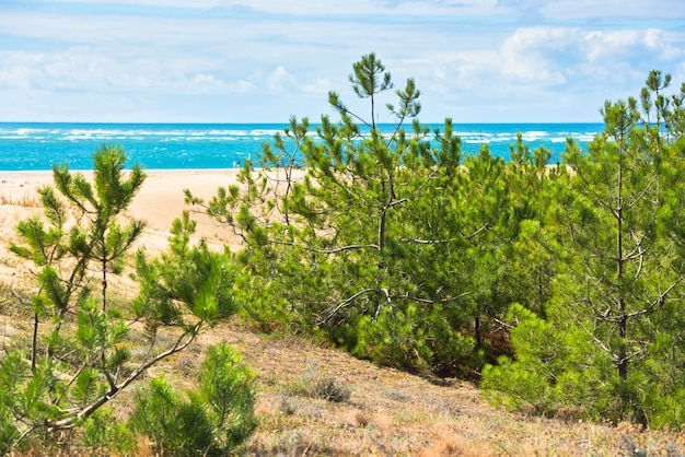 Nadmorski krajobraz z sosnami i wydmami. wybrzeże atlantyku we francji
