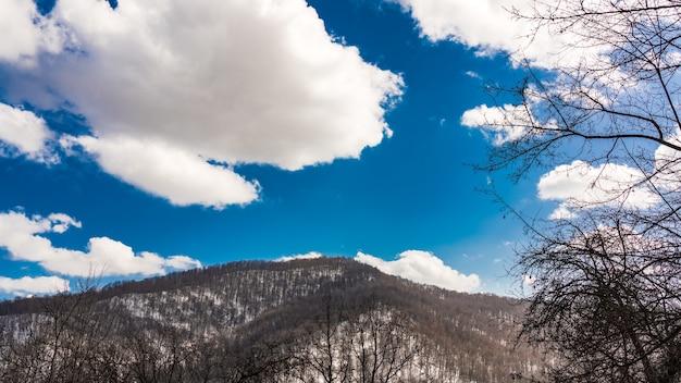 Nagi zimowy las w górach