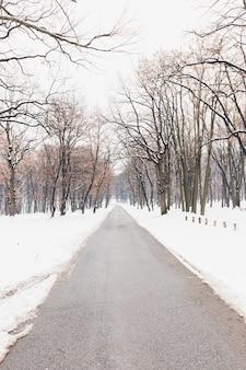 Nagie drzewa blisko pustej drogi podczas zimy