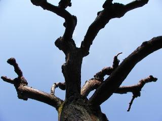 Nagie drzewa, drzewo, niebo