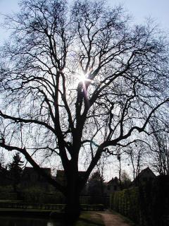 Nagie drzewa, drzewo