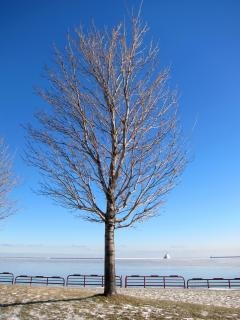 Nagie drzewa, gałęzie