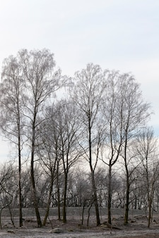 Nagie drzewa liściaste w sezonie zimowym, krajobraz