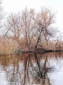 Nagie drzewa na brzegu rzeki odbite w wodzie