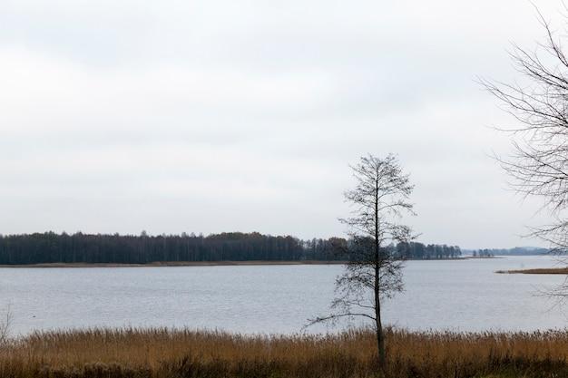 Nagie drzewa, rosnące nad brzegiem szerokiego jeziora w pochmurną pogodę, jesienny ponury krajobraz