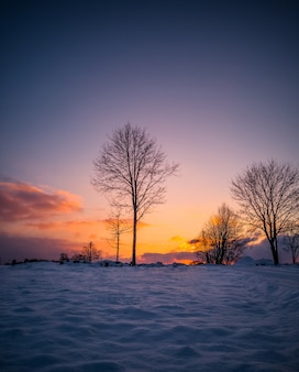 Nagie drzewa w zimowym zachodzie słońca, old vintage look edytuj.