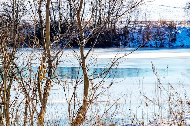 Nagie drzewa zimą nad rzeką