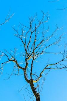 Nagie drzewo na tle błękitnego nieba przy słonecznej pogodzie