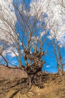 Nagie drzewo o niesamowitym kształcie